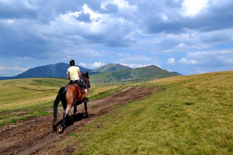 Rodna山在罗马尼亚-与人的马 库存照片