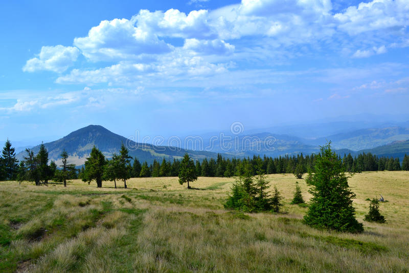 Rodna山在罗马尼亚-与tre的象草的土坎 免版税图库摄影