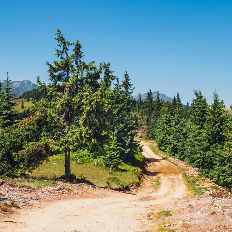 Rodna山风景在东喀尔巴汗,罗马尼亚 图库摄影
