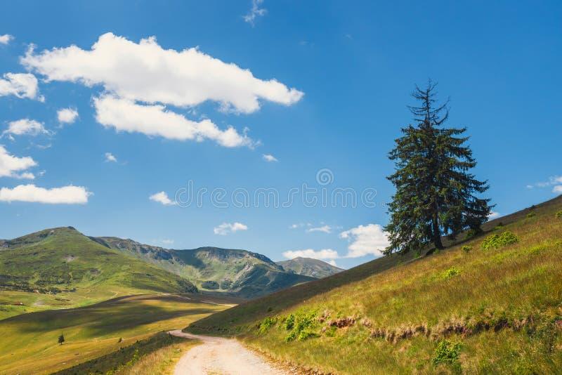 Rodna山风景在东喀尔巴汗,罗马尼亚 免版税库存照片