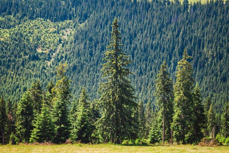 Rodna山风景在东喀尔巴汗,罗马尼亚 库存照片