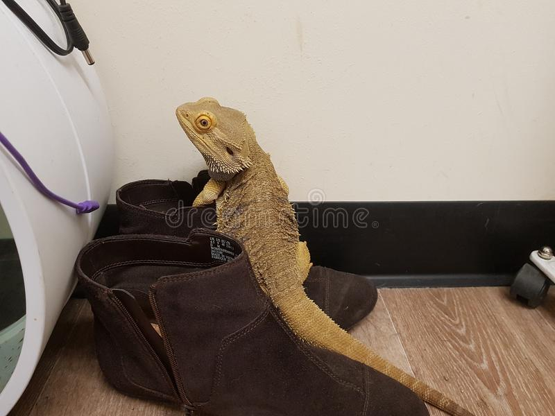 Rodney il drago fotografia stock