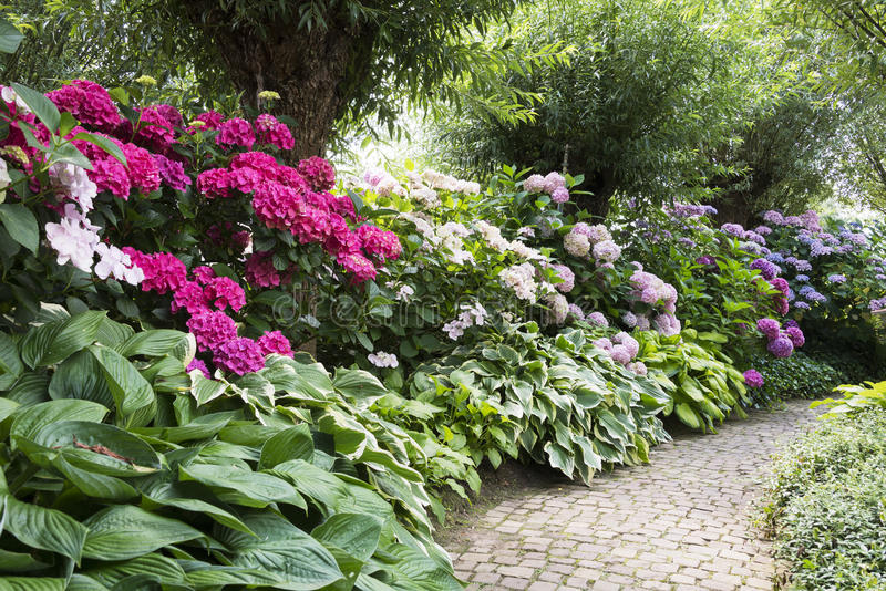 Rododendri in giardino inglese fotografia stock immagine - Giardino in inglese ...