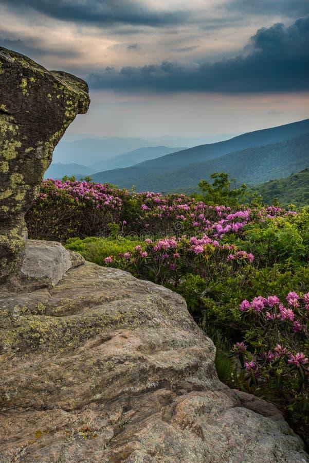 Rododendro atrás do vertical da opinião do keyhold de Jane Bald foto de stock