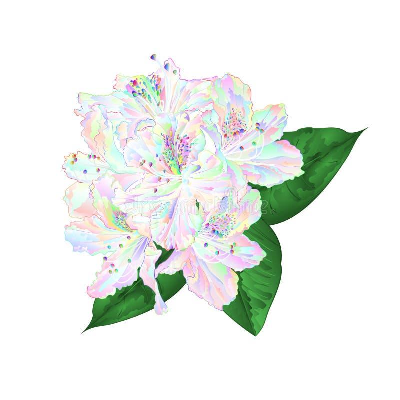Rododendro coloreado multi de las flores con las hojas en un ejemplo blanco del vector del vintage del fondo editable stock de ilustración