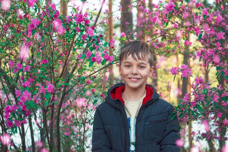 Rododendro di fioritura del maralnik in montagne di Altai immagini stock libere da diritti