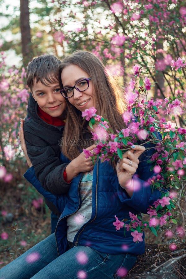 Rododendro di fioritura del maralnik in montagne di Altai fotografia stock libera da diritti