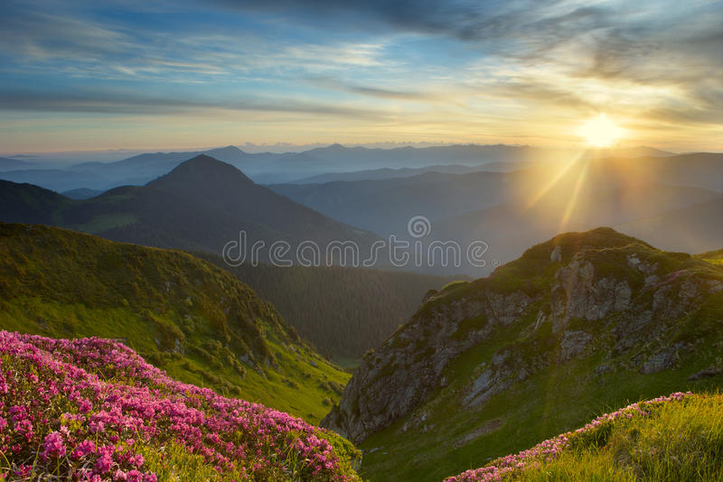 Rododendro en montañas foto de archivo