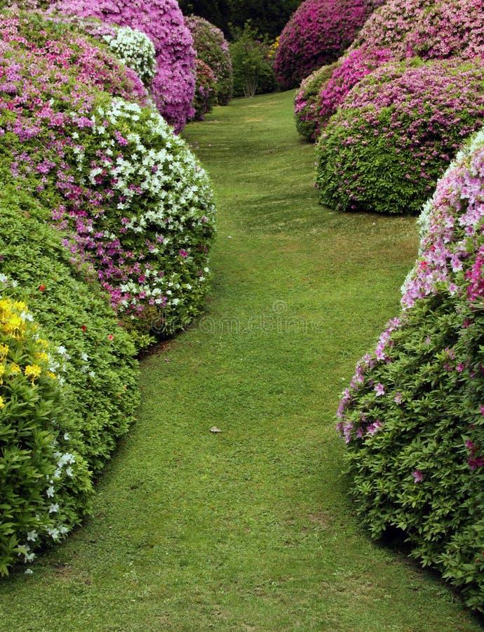 Rododendron en azalea's met gazon royalty-vrije stock afbeeldingen