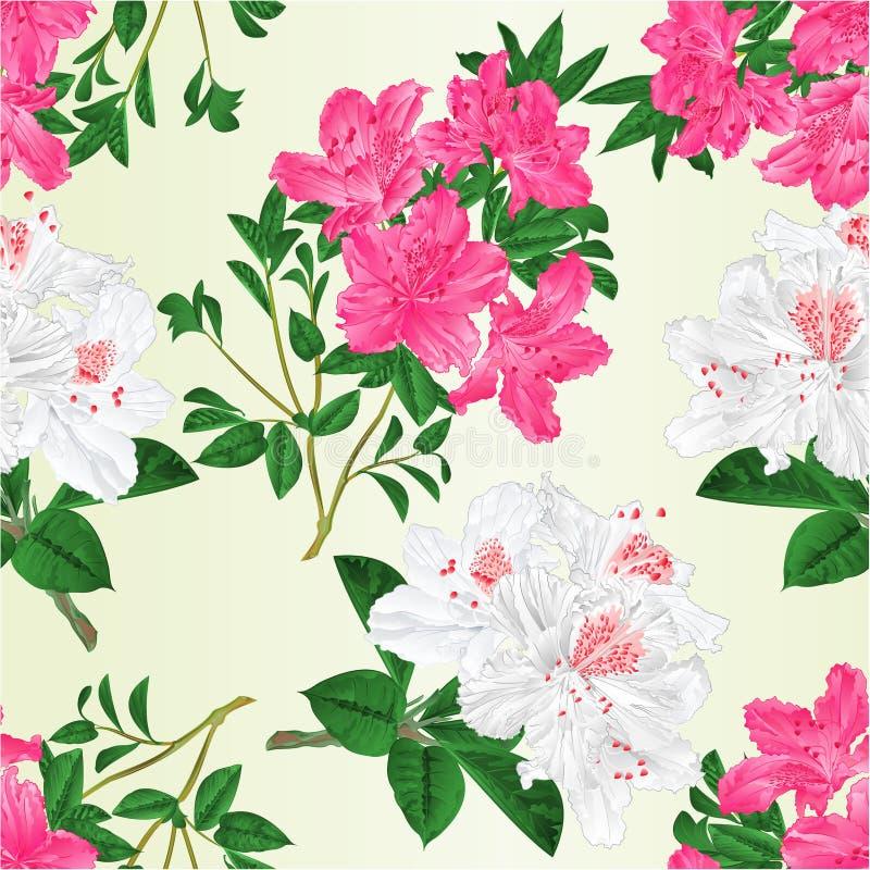 Rododendros sem emenda dos galhos rosa e branco da textura com ilustração botânica editável do vetor do vintage das flores e das  ilustração do vetor