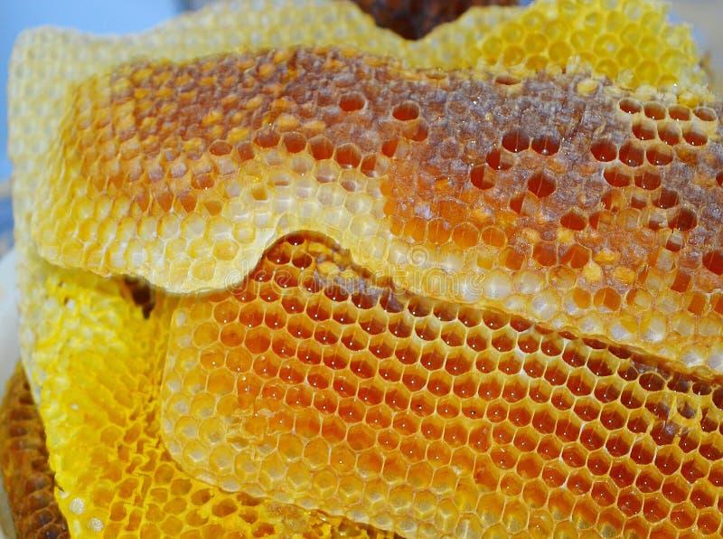 Rodopica natural del melifer de los apis de la miel foto de archivo