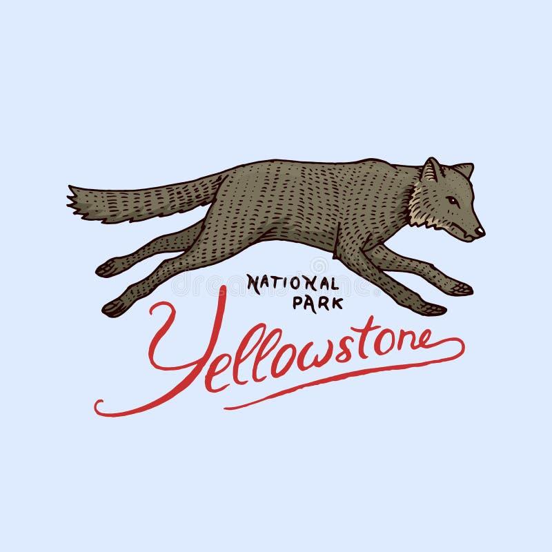 Rodowitego Amerykanina wilk stara etykietka lub odznaka dla obozować grawerująca ręka rysująca w starym nakreśleniu Dzikie zwierz royalty ilustracja