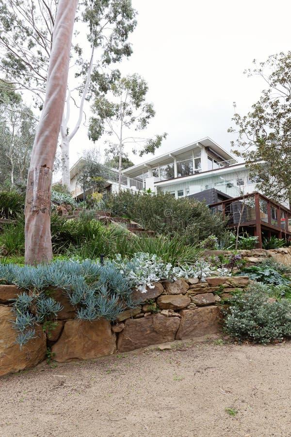 Rodzimy australijczyk kształtował teren ogród z ogromnymi gumowymi drzewami obrazy royalty free
