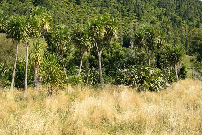 Rodzimy krzak w Nowa Zelandia obraz stock