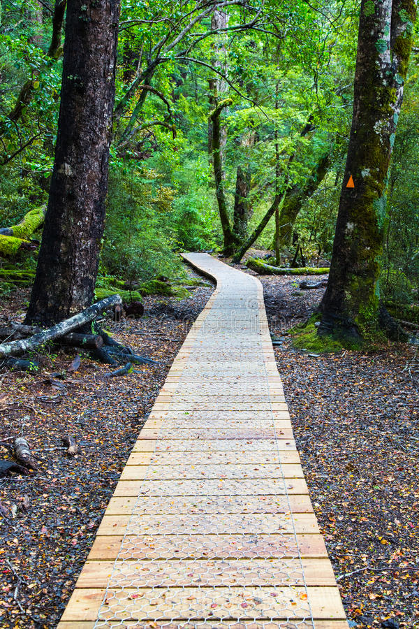 Download Rodzimy lasowy spacer zdjęcie stock. Obraz złożonej z odtwarzanie - 28965762