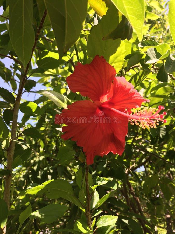 Rodzimy wyspa insekt obrazy royalty free