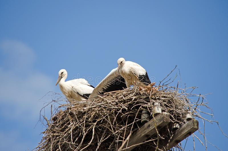 Rodzina bociany w gniazdeczku obrazy stock