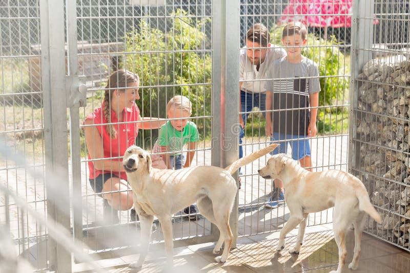 Rodzina dostaje znać psy w zwierzęcym schronieniu obraz stock