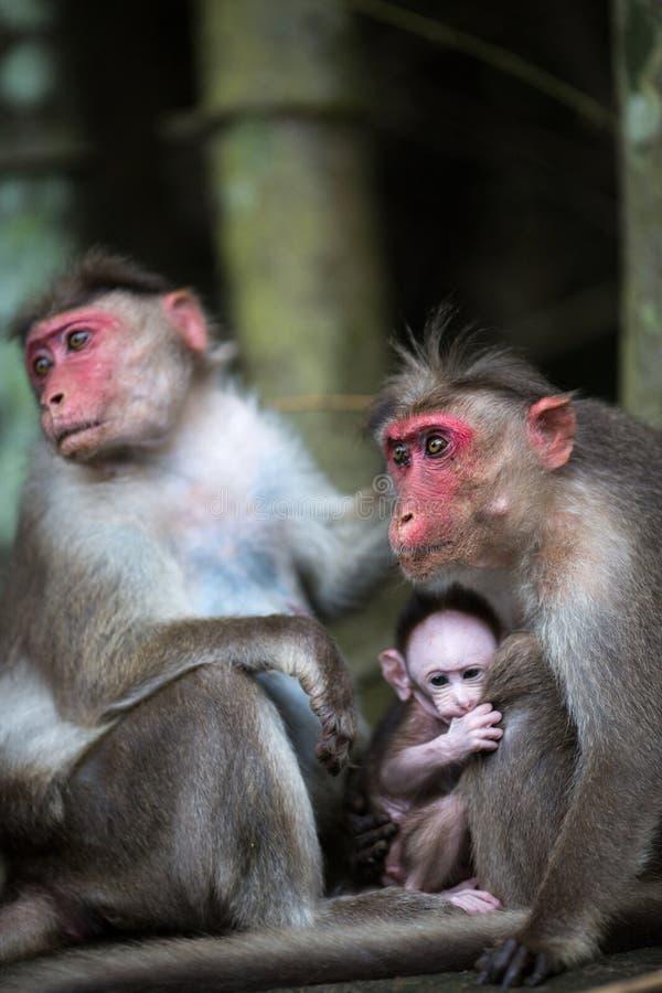 Rodzina małpy obrazy stock