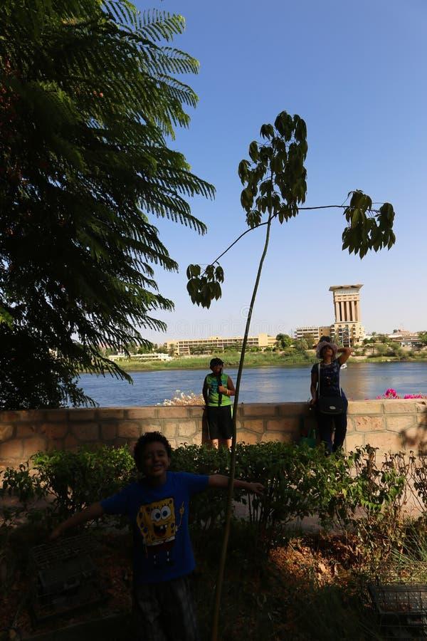 Rodzina przy rośliny wyspą przy Aswan Egipt fotografia stock