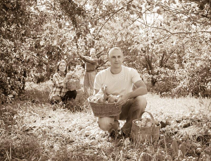 Rodzina z zbierającymi jabłkami w ogródzie fotografia royalty free