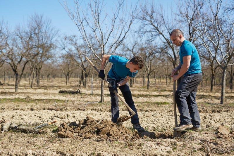 Rodzina zasadza śliwkowego drzewa w sadzie obrazy stock