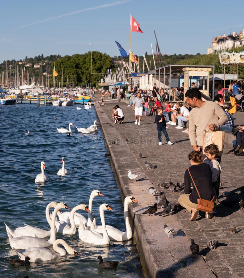 Rodzinni ?ywieniowi ptaki w Genewa zdjęcia royalty free