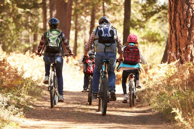 Rodzinny halny jechać na rowerze na lasowym śladzie, tylny widok obrazy stock