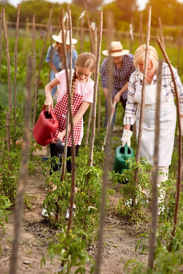 Rodzinny interes w ogródzie zdjęcia royalty free