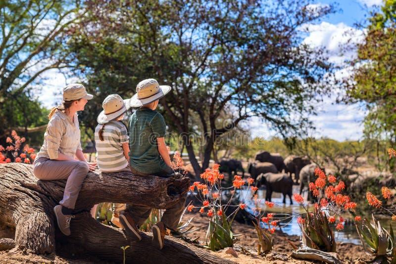 Rodzinny safari obrazy royalty free