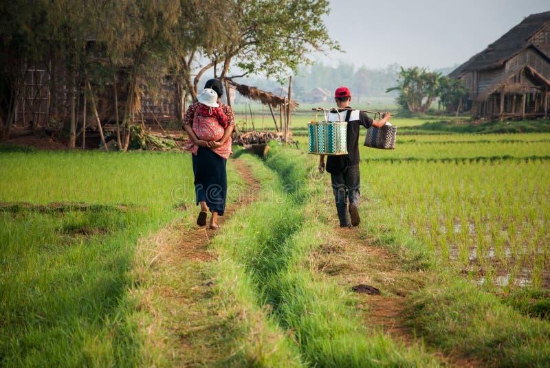 Rodzinny spacer na sposobie wśród ryżu pola w Myanmar fotografia stock