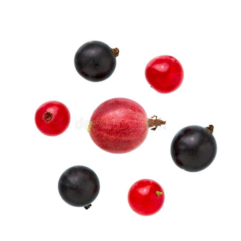 Rodzynek, agrest Rozsypisko świeża agrestów, czarnego i czerwonego rodzynku owoc, obrazy stock