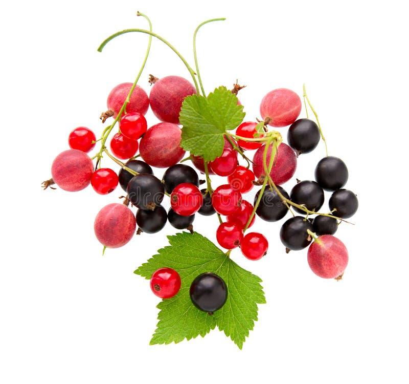 Rodzynek, agrest Rozsypisko świeża agrestów, czarnego i czerwonego rodzynku owoc, fotografia stock