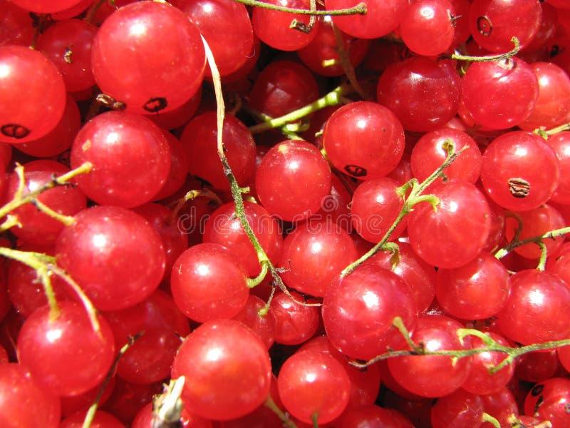 rodzynku czerwona jagoda zdjęcia royalty free