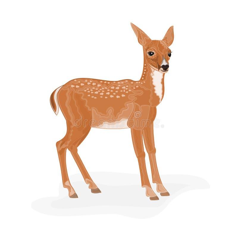Roe Deer foto de stock