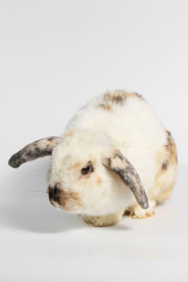 Roedor, animal del mamífero fotos de archivo