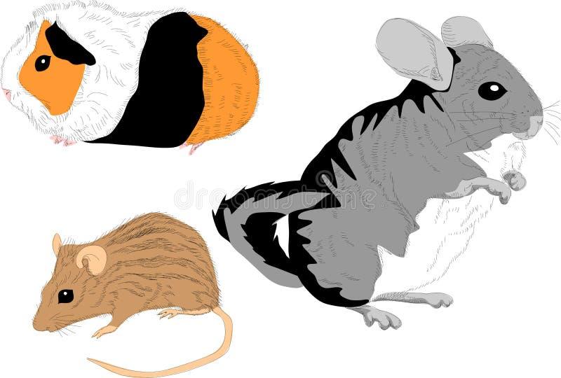 Roedor do animal de estimação ilustração royalty free