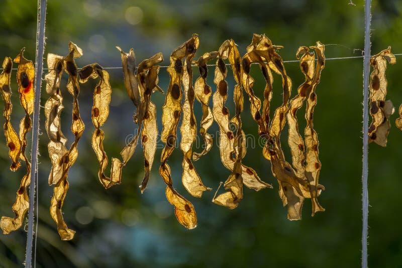 Roemeense traditionele droge stomende die boneschil, voor de winter in het zonlicht wordt bewaard stock foto's