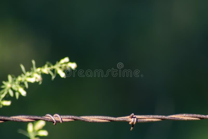 Roestig prikkeldraad tegen groene achtergrond met vaag onkruid - selectieve fous en ruimte voor exemplaar stock foto