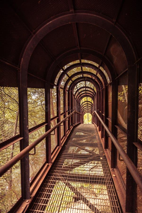 Roestige ijzerbrug met het behandelen in bos stock afbeelding