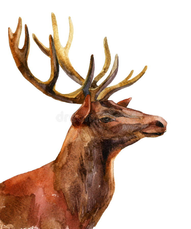 Rogacz - profilowy widok ilustracja wektor