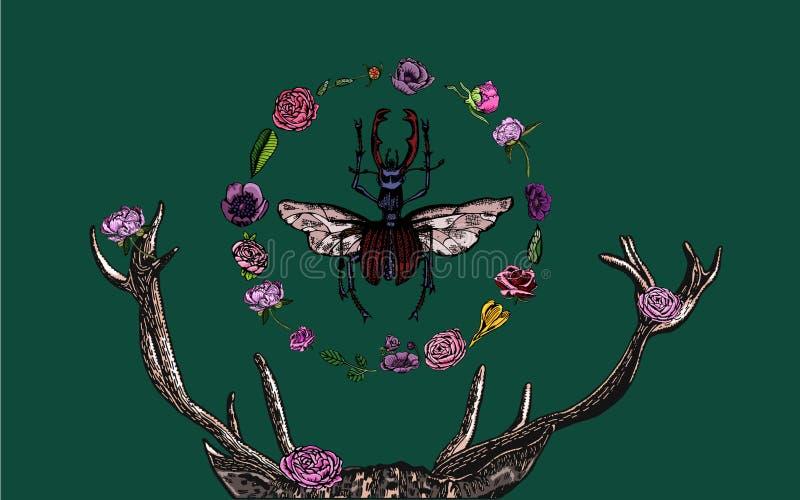 Rogaczy poroże, jeleń ściga, kwitnąca flora na ciemnozielonym tle - wręcza patroszonego fotografia stock