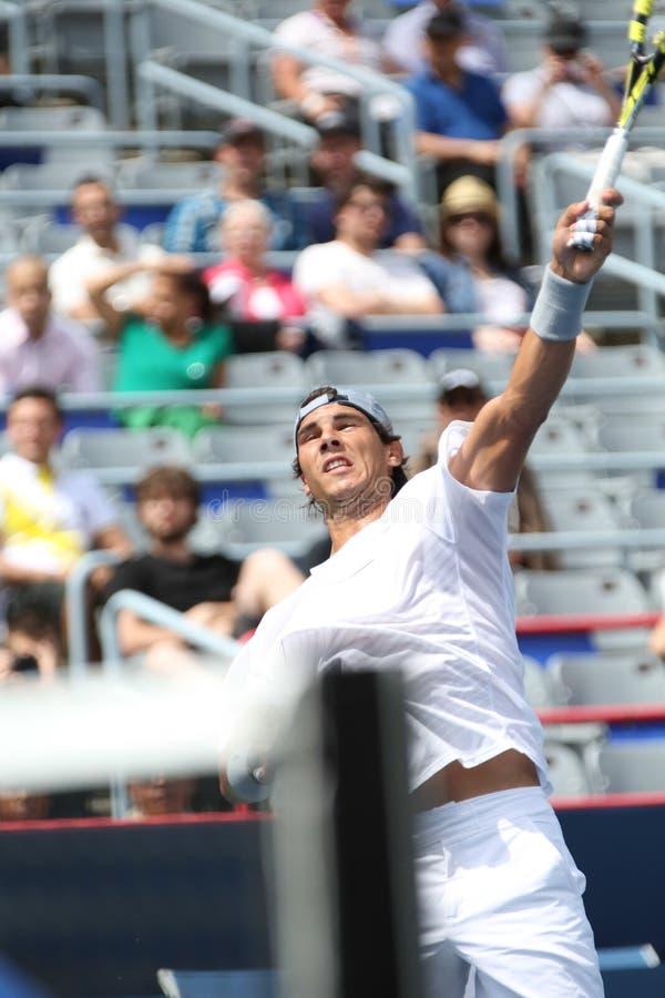 Rogers filiżanka Novak Djokovic zdjęcia royalty free