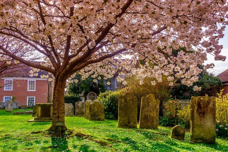 Rogge begraafplaats-4 stock foto