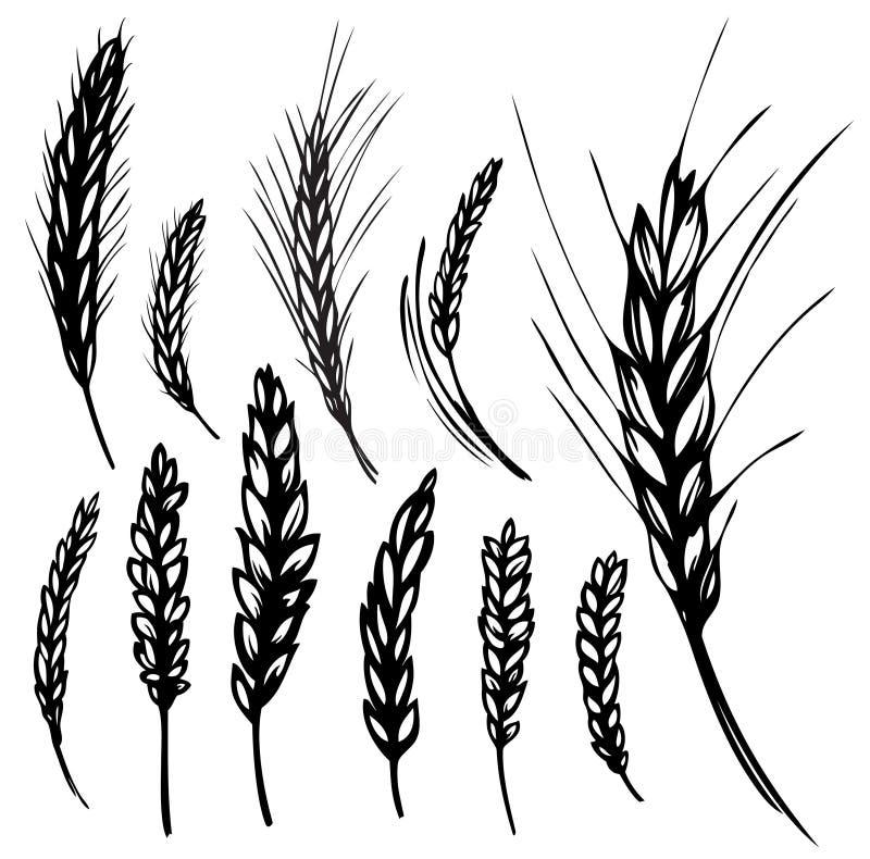 Rogge, tarwe vector illustratie