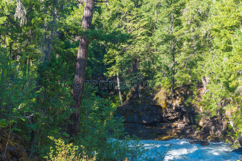 Rogue River-Siskiyou National Forest fotografie stock