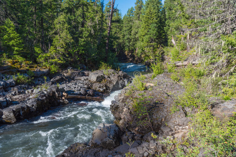 Rogue River-Siskiyou National Forest royalty free stock image