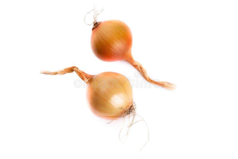 Roh-Gelb-Zwiebeln auf weißem Grund stockbilder