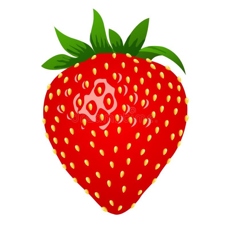 Rohe Erdbeere, Zauntritt 3d Vector Illustration, den Clipart, lokalisiert auf weißem Hintergrund vektor abbildung
