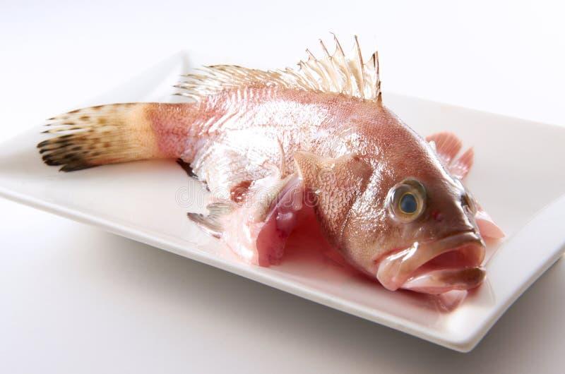 Rohe Fische Lizenzfreie Stockbilder